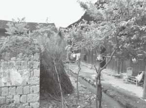 图1-3 长乐村一处民房前淤积的脏水