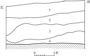 图12 DM7地层堆积
