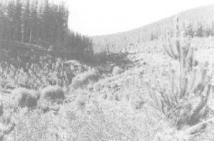 图2 阿贡绿地溪(Greens Creek)整个流域都种上了松树