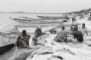 湖岸遍布渔网
