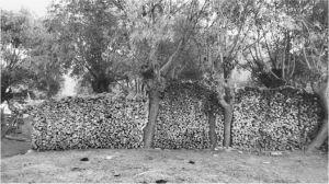 """图3 林区林芝县一村民家的薪柴""""堆"""""""