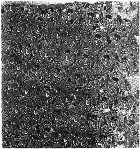 图11 马王堆汉墓出土的印花敷彩纱