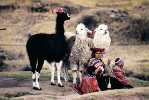身着民族服装的安第斯山民和家畜驼马(左)、羊驼