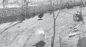 图4-7 新店台村贫困户家的后院养鸡场地