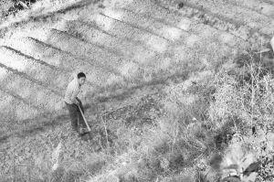 图2-3 外出务工村民回家务农