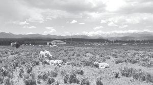 图5-2 一户人家的夏季牧场