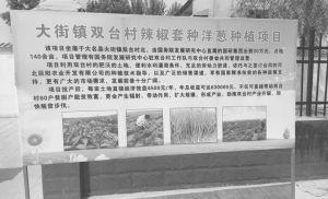 图3-3 双台村辣椒套种洋葱产业扶贫项目