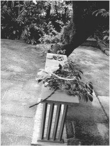 图4-48 供神灵寄宿的杨桐树枝