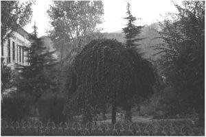 日喀则市绿地