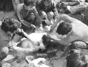 图3-6 嘎汤帕节的杀猪分肉