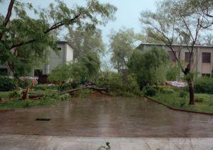 大风过后的安阳工作站(2010年)