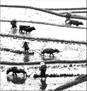 图1-2 农耕时节(2010年大山于浙江省丽水市拍摄)