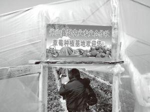 图3-8 鑫磊合作社草莓大棚