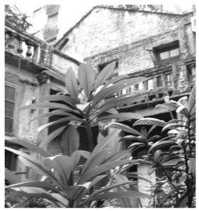 图3-17 潘氏花园院落