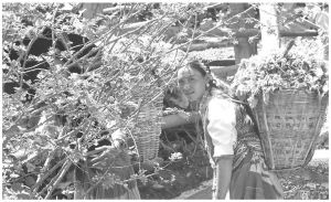 图4-5 劳动中的彝族妇女(笔者拍摄于2009年7月)