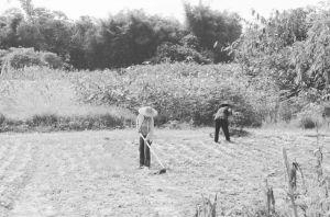 图2 干农活的村民(拍摄于2015年8月)