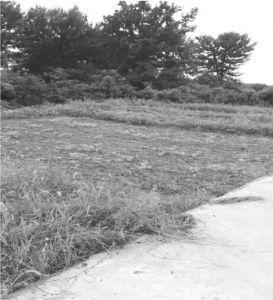 图32 后龙山上村民开垦的小片旱地