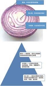 图2-6 文化洋葱模型