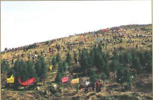 漫山遍野的植树市民